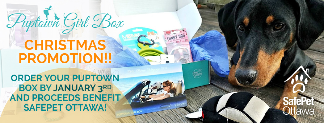 puptown girl box for safepet ottawa